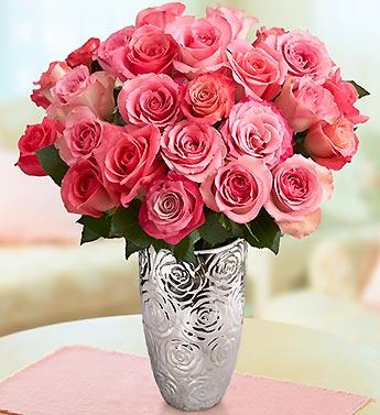 Raspberry Sorbet Roses