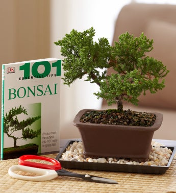 Bonsai Beginner?s Set
