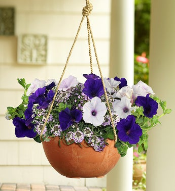Proven Winners� Velvet Skies Dish Garden