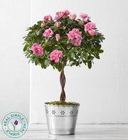 Azalea Topiary by Real Simple®