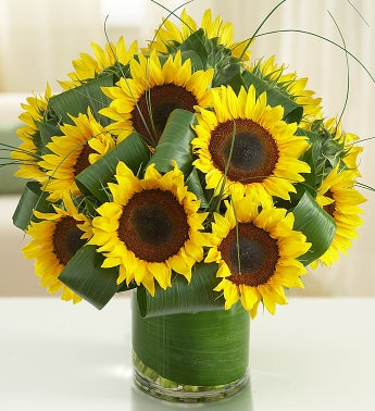 Sun-Sational Sunflowers?