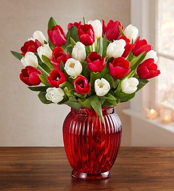 Jolly Holiday Tulips, 15-30 Stems