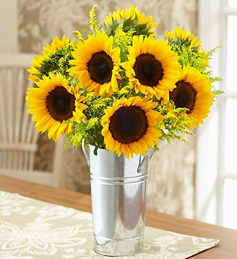 Spectacular Sunflowers + Free Gift