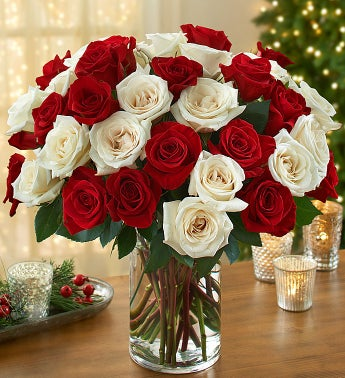 Peppermint Rose Bouquet, 36 Stems