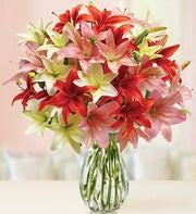 Beautiful Lilies