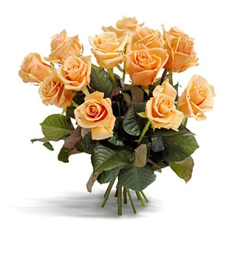 Awesome Apricot Roses