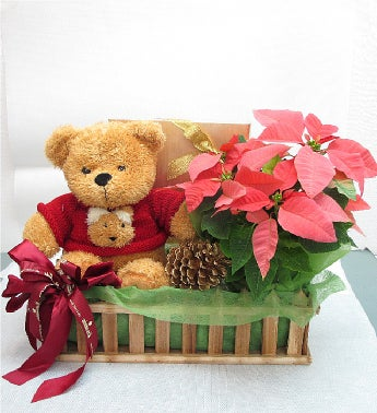 Poinsetta and Teddy Bear
