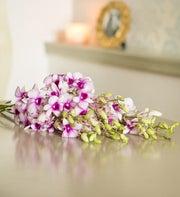 Julia Orchids