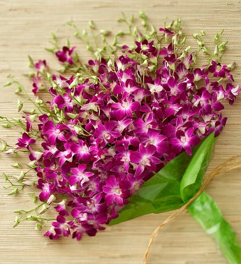 Exotic Breeze Dendrobium Orchids from 1800flowers.com