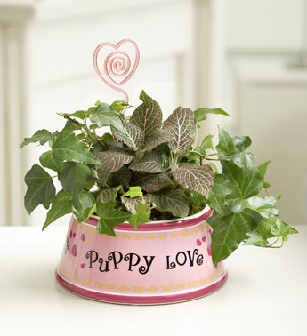 ivy plant in pink ceramic dog dish