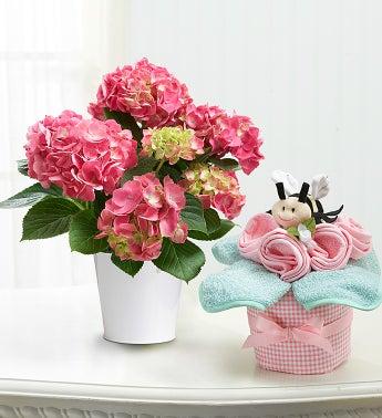 Baby Hydrangea Gift Set