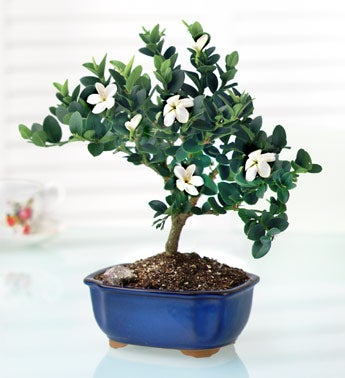 Bonsai of the Month(sm)