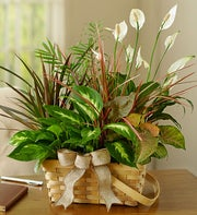 Cremation Plants