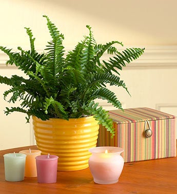 Fern in Ceramic Planter with Candles