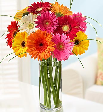 12 Stem Gerberas Daisy Bouquet