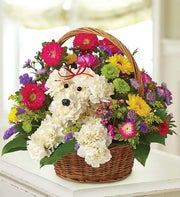 a-DOG-able� in a Basket