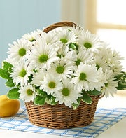 International Canada - White Daisy Basket