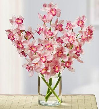 Pink Cymbidium Orchid Trio